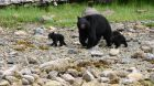 — Clayoquot Wilderness Resort - Bedwell River Outpost — city, country