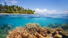 Jean-Michel Cousteau Fiji Islands Resor