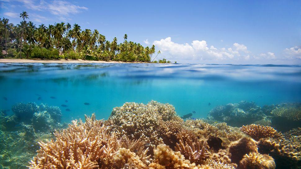 Jean-Michel Cousteau Fiji Islands Resort, Cakaudrove ...