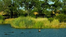 Kings Pool Camp — Linyanti Wildlife Reserve, Botswana