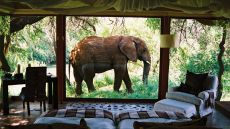 Makanyane Safari Lodge  Madikwe Game Reserve, South Africa
