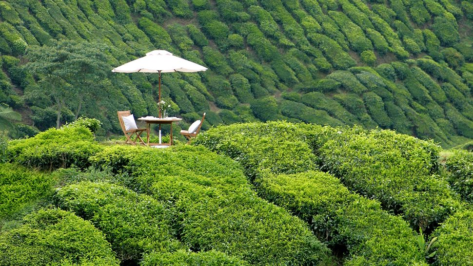 Cameron Highlands Malaysia  City new picture : Cameron Highlands Resort, Pahang, Malaysia